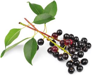 Черемуха (плоды) 50 гр.