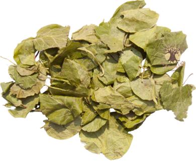 Грушанка (лист) 20 гр.