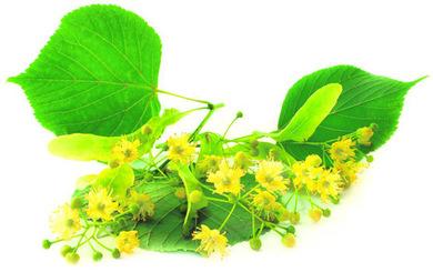 Липа (цветки) 30 гр.